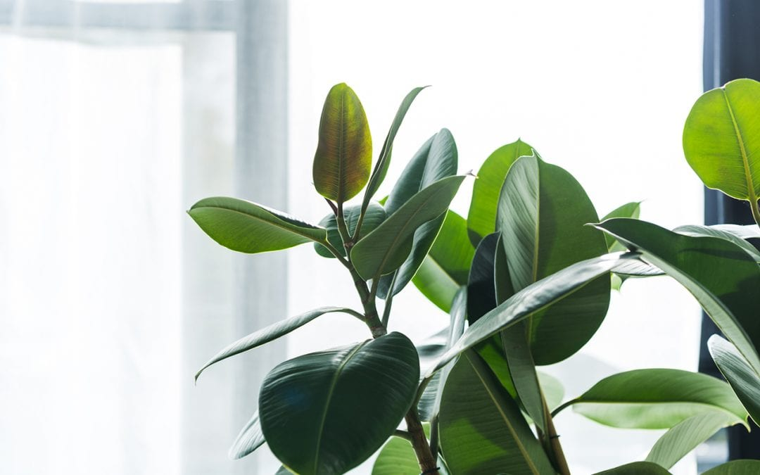 4 Useful Ways for Improving Indoor Air Quality at Home